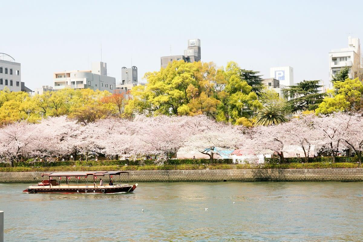 沿途櫻花盛開,很適合搭船遊覽。(圖片取自osaka-info.jp)