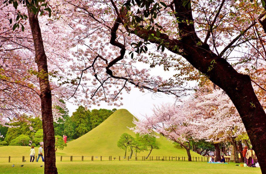 九州櫻花景點:水前寺成趣園 來源:https://kumamoto-guide.jp/tw/