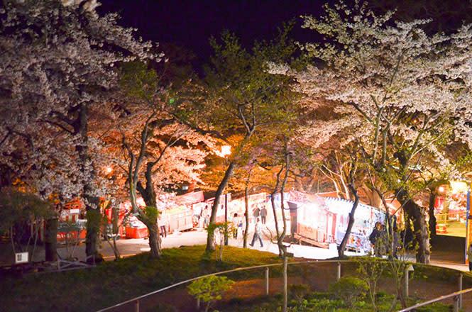 夜晚的函館公園櫻花依舊美麗。(圖片取自good-hokkaido.info)