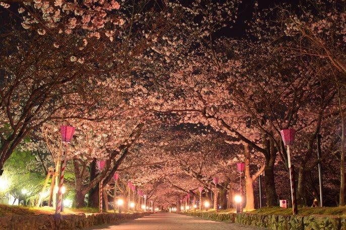 九州櫻花景點:大村公園 來源:https://www.nagasaki-tabinet.com/