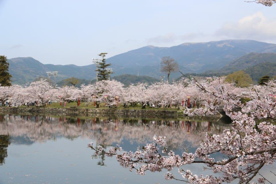 九州櫻花景點:小城公園 來源:http://www.city.ogi.lg.jp/