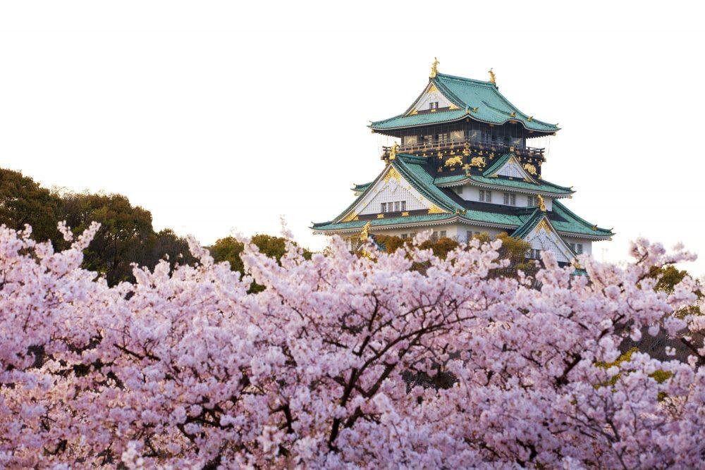 櫻花與天守閣相互映襯出的美麗景緻。(圖片取自fastjapan.com)
