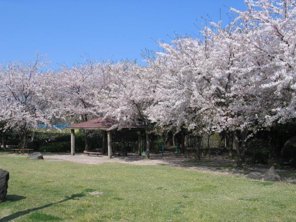 濟州島 新山公園 來源:http://jejufc.or.kr