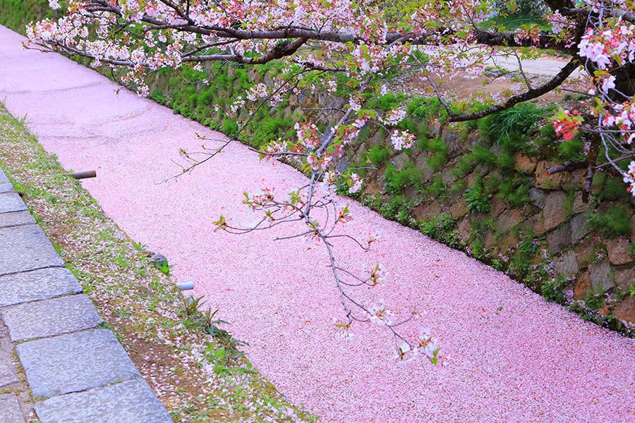 京都的哲學之道 來源:www.imamiya.jp