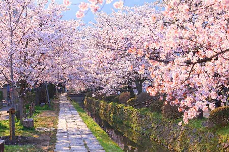 【2019櫻花季】4天3夜日本京都賞櫻行程!景點、交通、行程...一次搞定!
