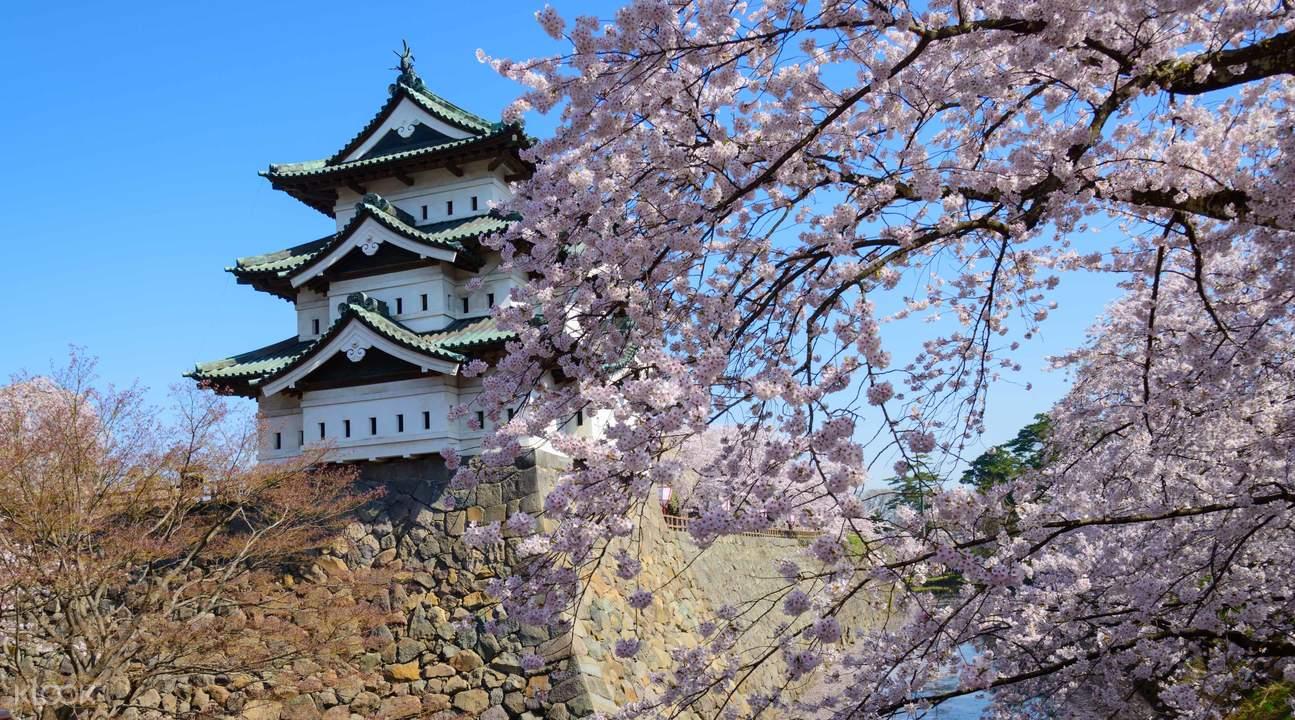 【日本自由行】日本青森櫻花景點懶人包!用JR PASS輕鬆一次玩透透