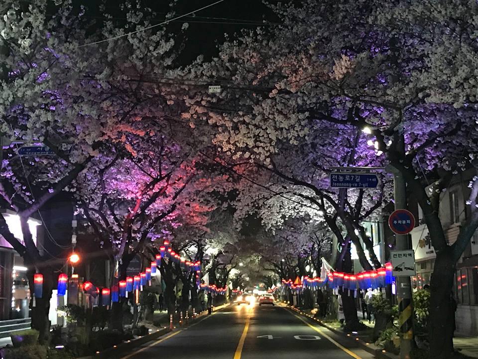 典農路賞夜櫻 來源:fb @visitjeju.ch