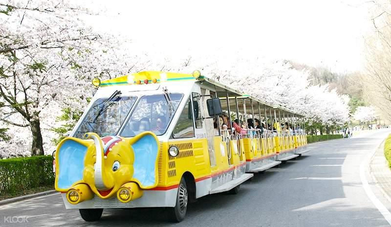 乘坐大象列車遊園賞櫻!