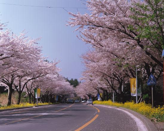 濟州島 長田里 來源:http://www.seoulilbo.com