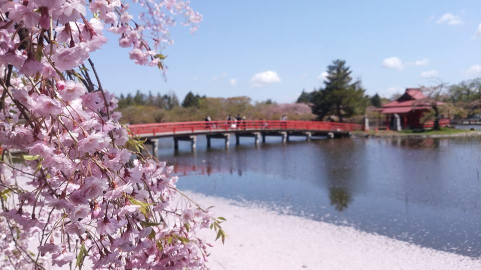 猿賀公園的櫻花、草木與水池形成的美麗景緻。(圖片取自www.sotoday.fun)