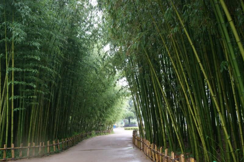 太和江大公園,圖片取自decemberrose71.tistory.com。