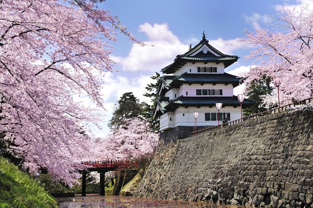 城山公園為戰國時代保留的遺址,是個超人氣賞櫻景點(圖片取自ume2013.blog.so-net.ne.jp)