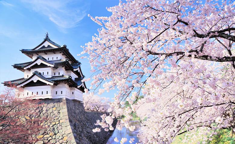 大阪城櫻花。(圖片取自benesse.jp)