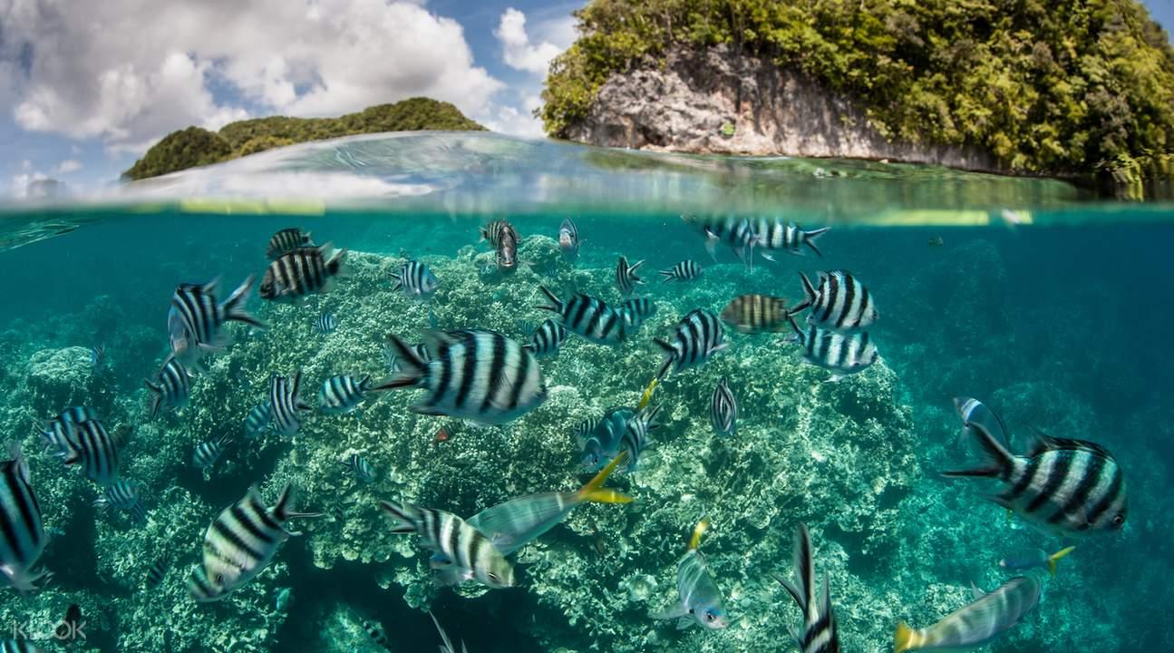 忘憂島最原始的珊瑚礁生態。