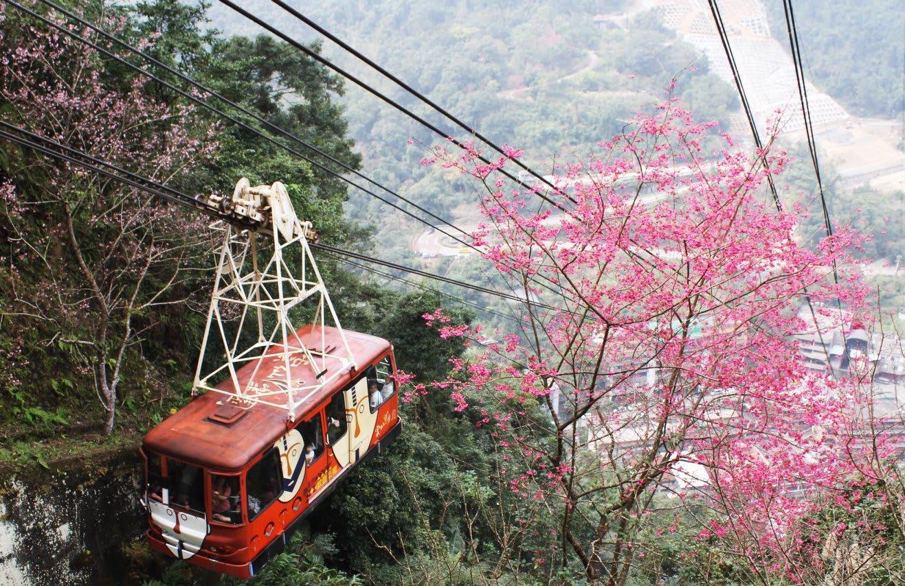 台北櫻花景點:烏來,圖片取自雲仙樂園FB粉絲團。