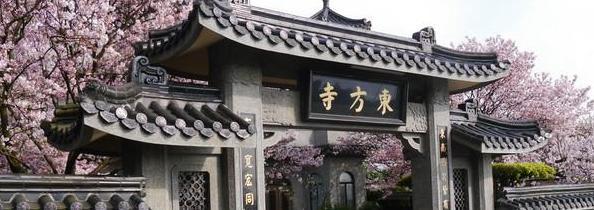 台灣櫻花景點:陽明山,圖片取自www.waytogo.cc。