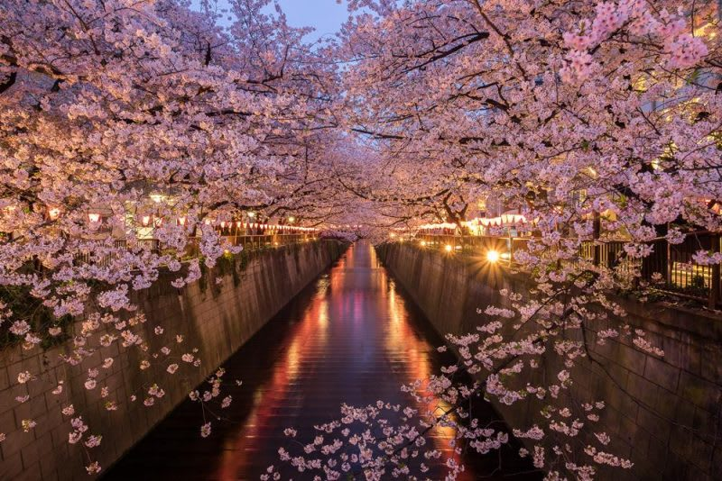 (清明節連假到東京旅遊,怎麼能錯過目黑川的夜櫻?)