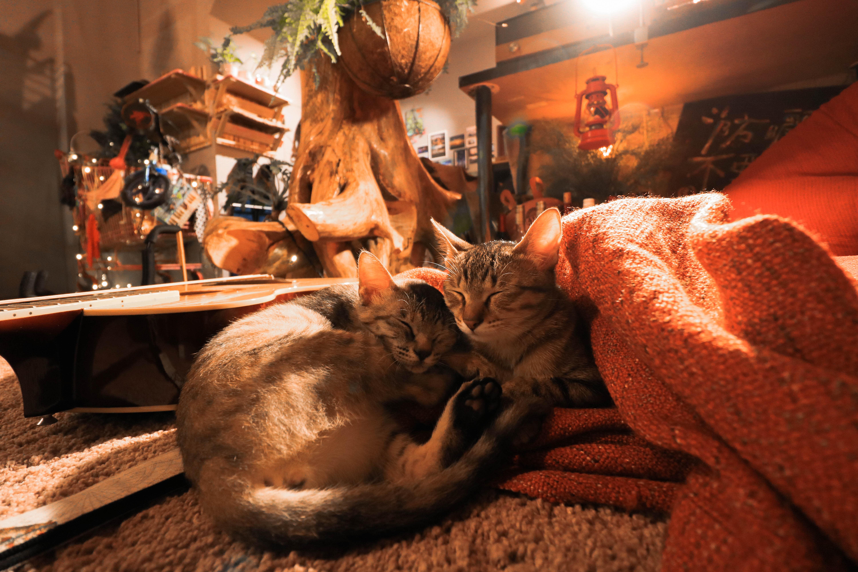 防曬不要擦太多,很適合愛貓的你來這裡住一晚。