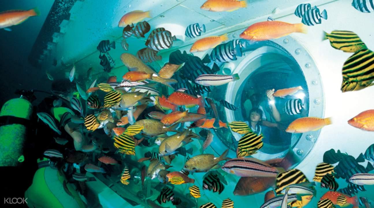 親眼見識奇幻的海底世界,除了潛水外,還可以搭乘潛水觀光艇。