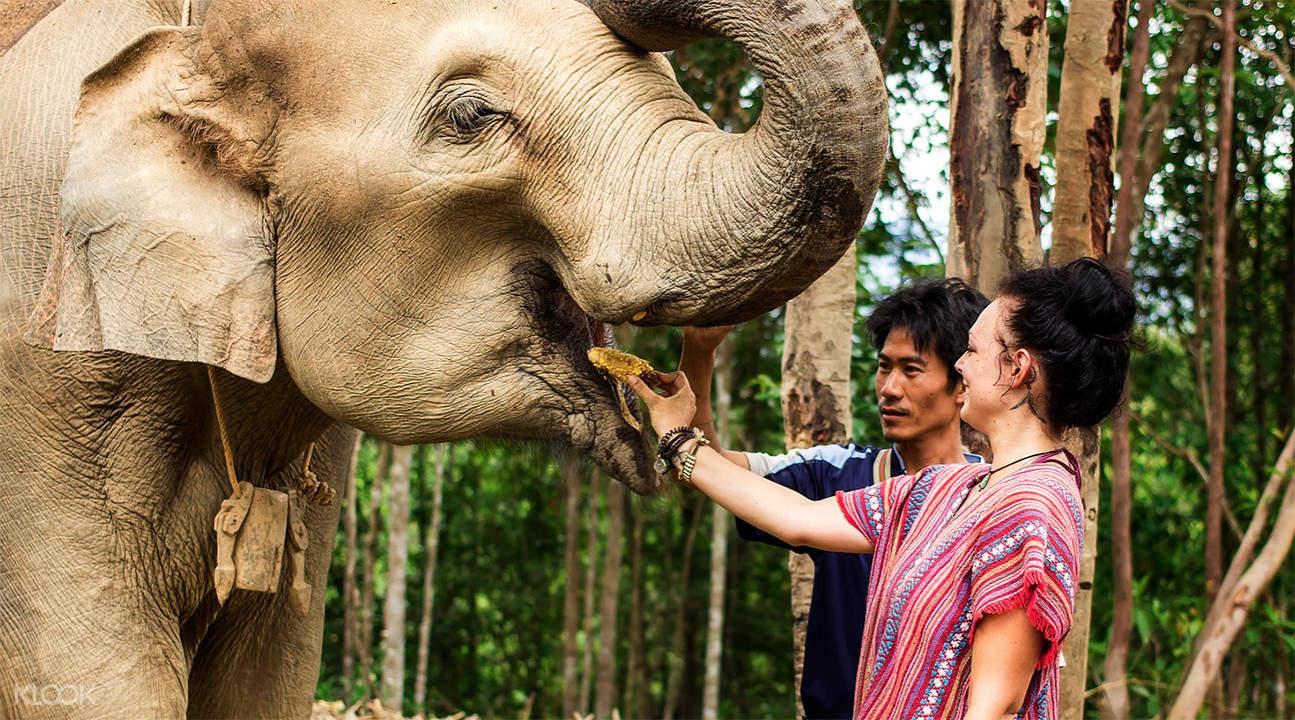 和大象一同嬉戲互動,非常有趣!