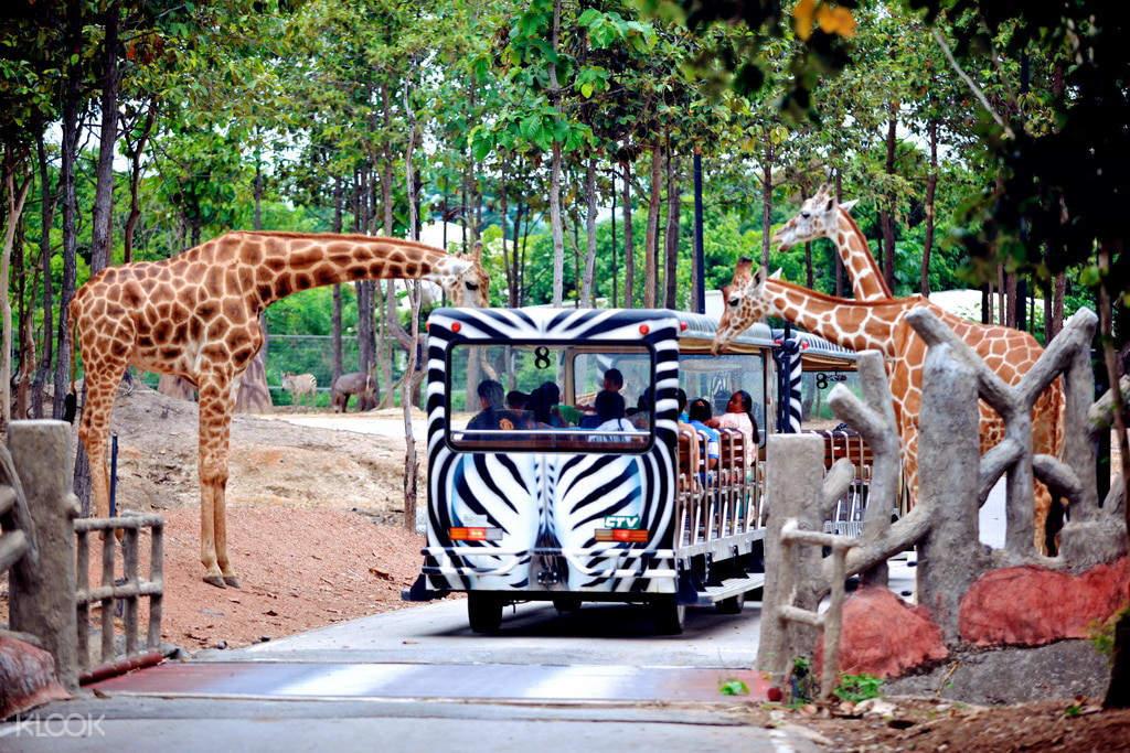 清邁夜間動物園,照片來源KLOOK官網
