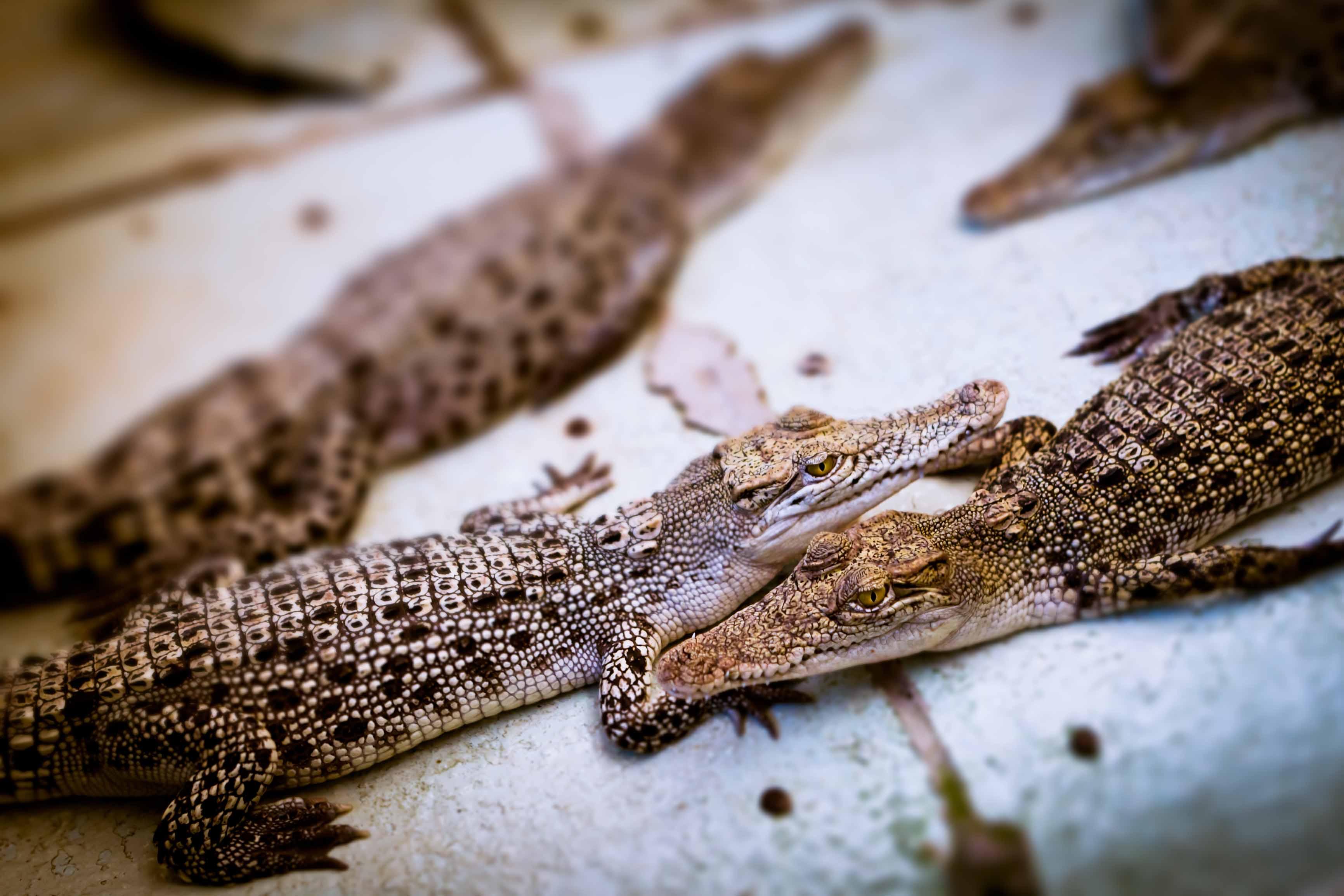 圖片取自https://bensonkua.wordpress.com/tag/palawan-wildlife-rescue-and-conservation-center/