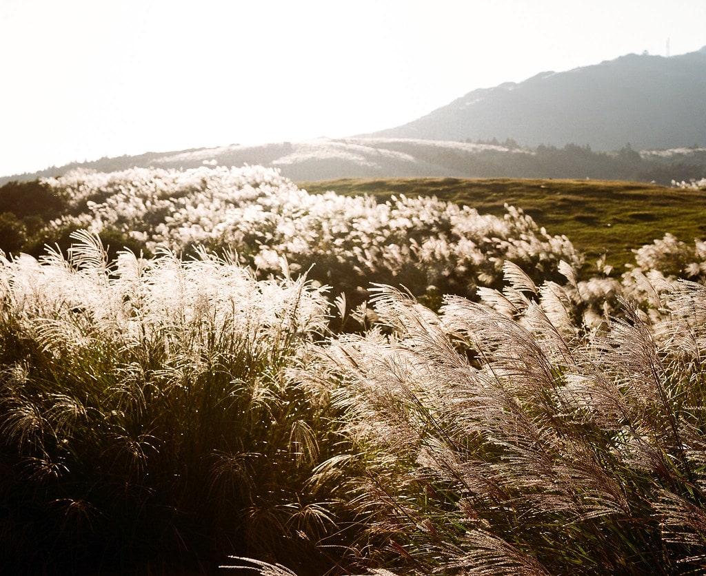 圖片取自台灣環境資訊協會@ Flickr_ Yen-Chi Chen