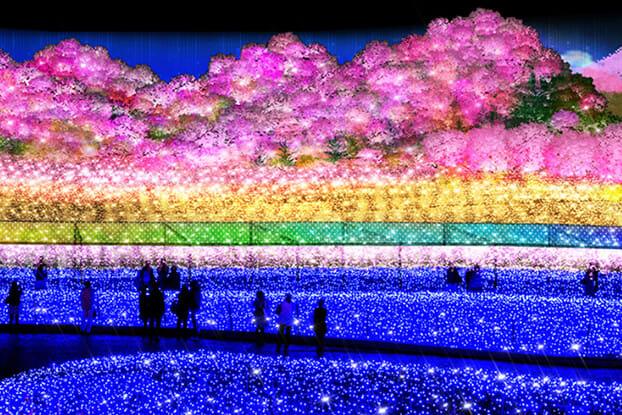 名古屋名花之里的千本櫻光雕春景