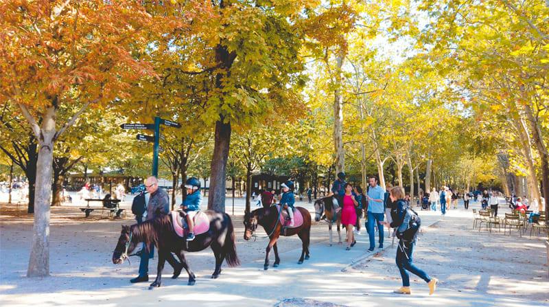 盧森堡公園內騎馬的小孩