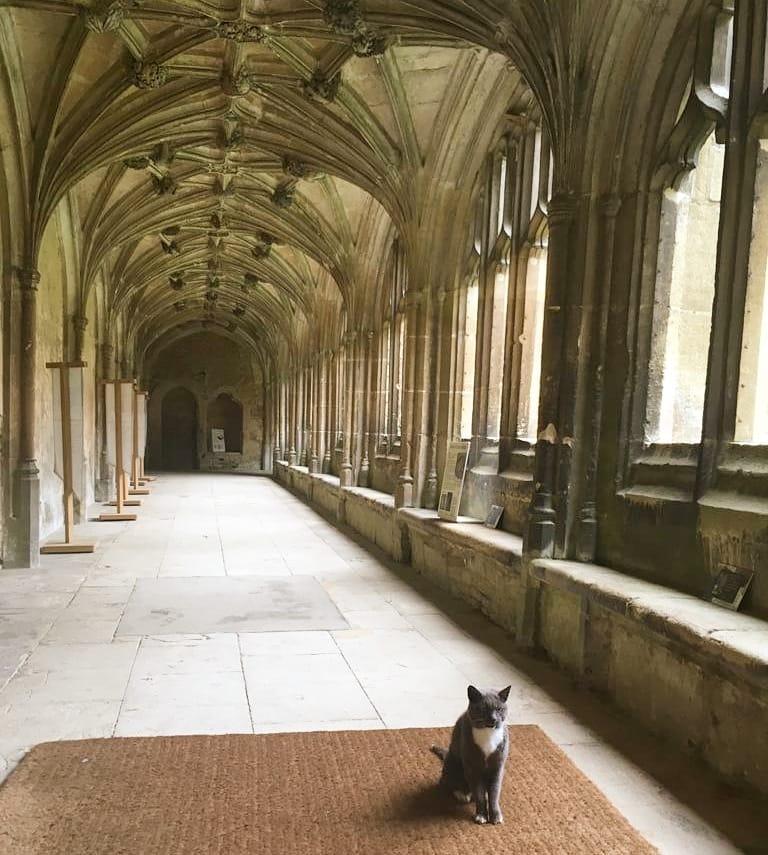 拉寇克修道院內熟悉的霍格華茲走廊,那隻貓是麥教授嗎?(圖片來源: National Lacock Trust FB page)