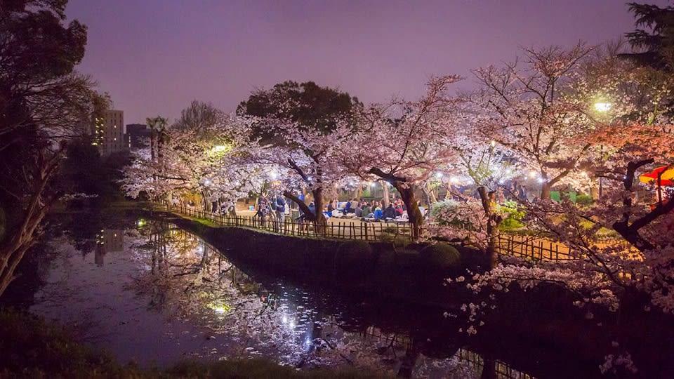 晚上的道後公園,燈火闌珊。