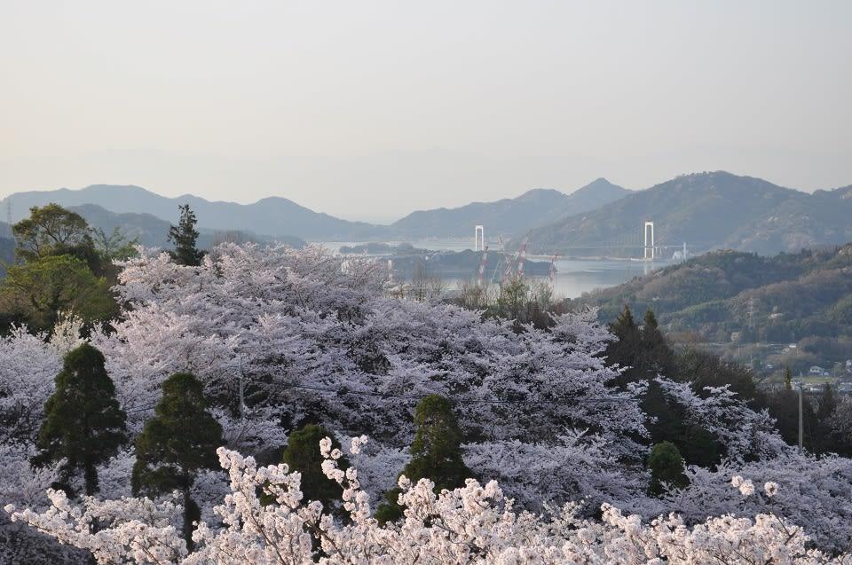 從開山公園可以看見四面八方的大橋和群島,視野廣闊。