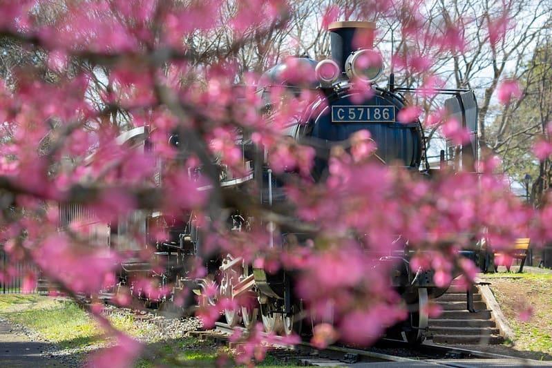 東京 櫻花