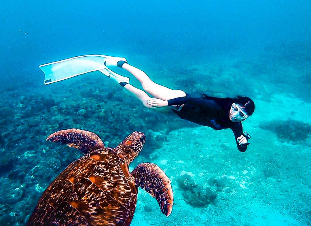 與海龜共泳潛水 – 水中與海龜合照2