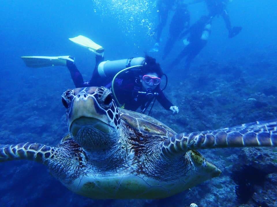 與海龜共泳潛水 – 水中與海龜合照1