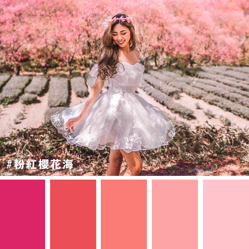 武陵農場的櫻花海