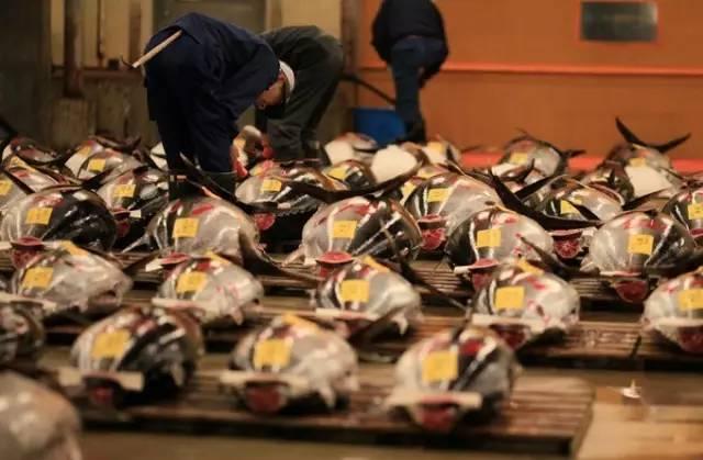築 地 市 場 : 世 界 最 大 的 漁 市 場 , 每 日 提 供 最 新 鮮 的 漁 獲 。