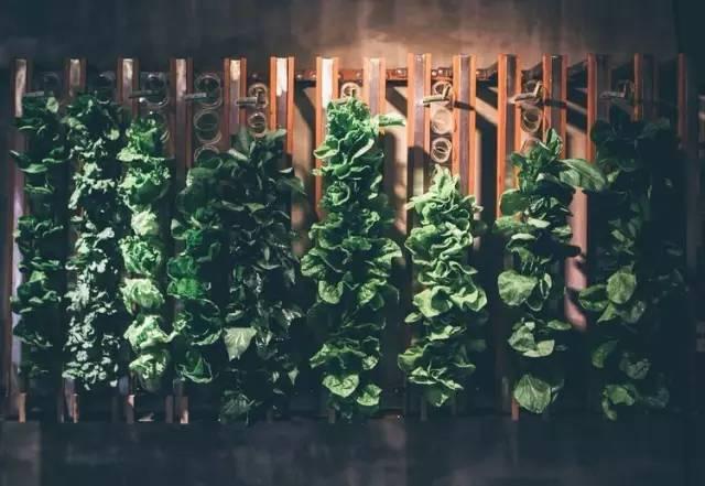 設 計 很 酷 的 蔬 菜 牆 。