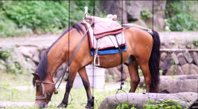 坐 上 馬 匹 帶 你 觀 山 看 水 。