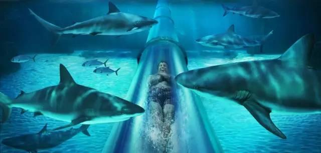 與 鯊 魚 共 游 !?