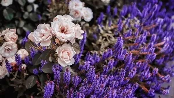 美 麗 野 花 。
