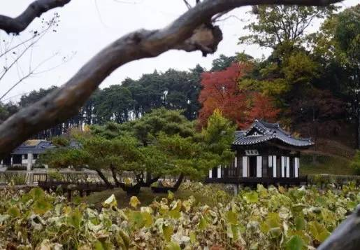 冬 天 一 定 要 來 江 原 道 賞 雪 或 是 看 楓 葉 !
