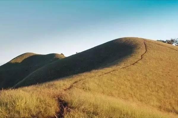 風 吹 早 低 見 牛 羊 的 場 景 , 在 清 邁 也 可 以 見 到( Instagram:tts_13 )