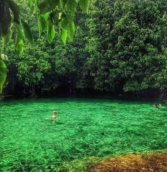 海 水 被 染 成 了 翠 綠( Instagram : amandinevernale )