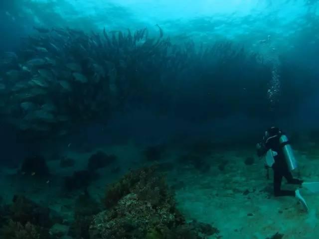 整 群 的 海 龜 、 魚 群 游 過 來 , 非 常 壯 觀 。