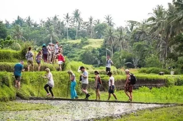 參 觀 綠 色 學 校 的 Green Journey。