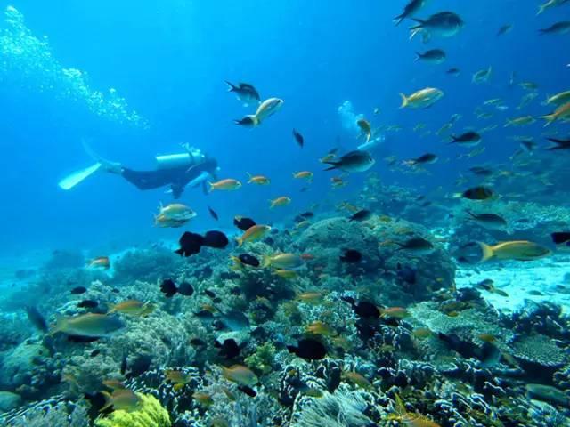 水 中 充 滿 各 種 海 底 生 物 , 非 常 壯 觀 。