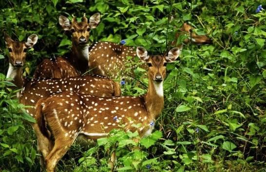 野 生 鹿 。