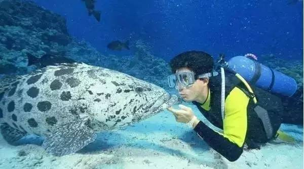 各 式 各 樣 的 海 底 生 物 。
