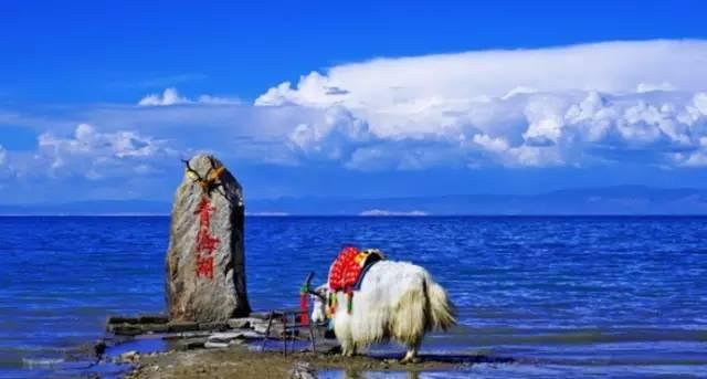 青 海 湖 。